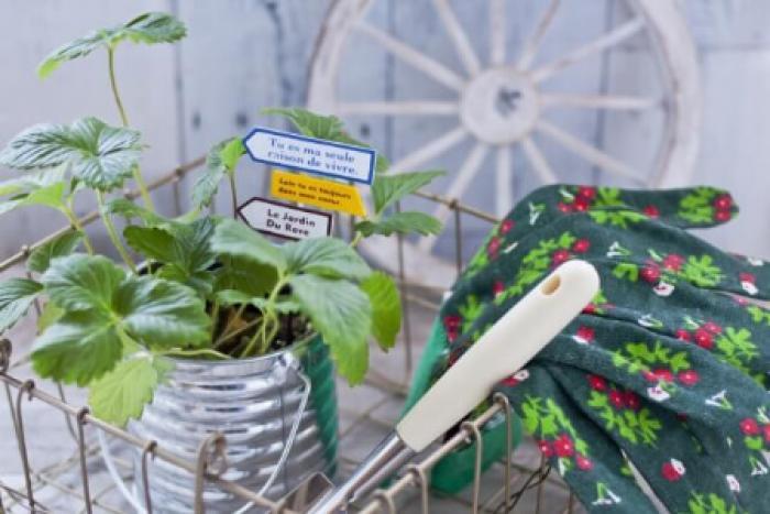 植え替えたいのに鉢から抜けない!植物が鉢から抜けない時の5つの対処法