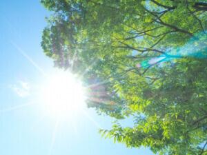 窓からの直射日光を遮っているか確認する