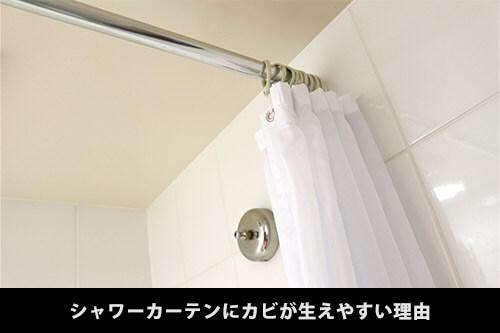 お風呂のシャワーカーテンにはカビが生えやすい!