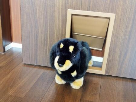 【ペットドア】愛犬や愛猫との暮らしに便利!特徴とメリット