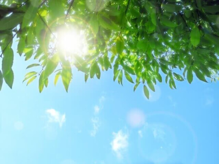 【網戸の張り替え】網戸が劣化する原因は太陽だった!
