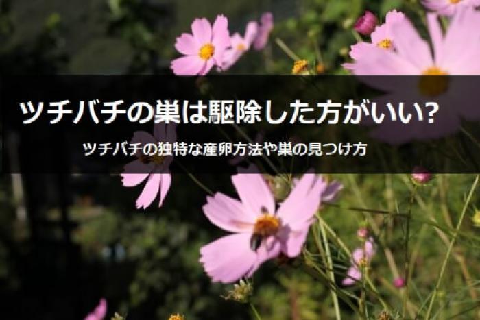 ツチバチの危険度は?ツチバチの特徴や独特な産卵方法について紹介