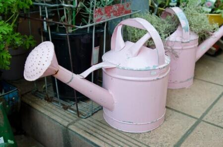 チューリップの正しい水やりと肥料の与え方を知ろう!
