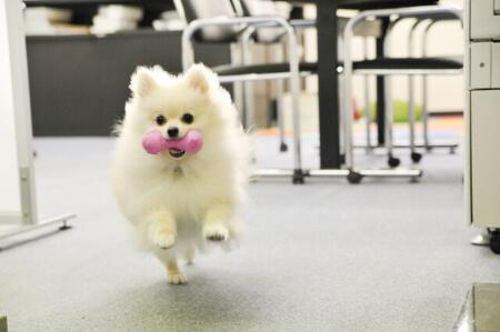 愛犬のためにカーペットを敷こう!フローリングはダメ