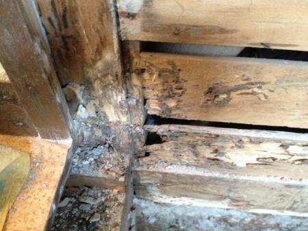 床下の湿気が及ぼす悪影響(害虫・木材の腐敗・カビ)