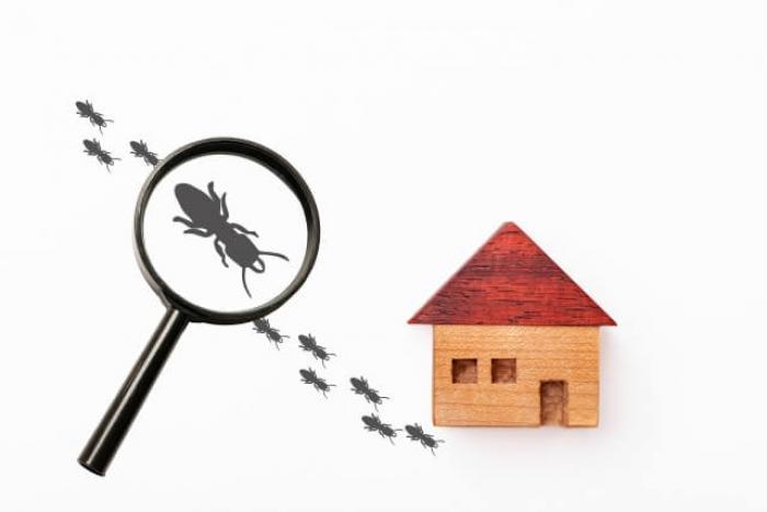 シロアリ予防をしてますか?簡単にできるシロアリの予防方法を解説!