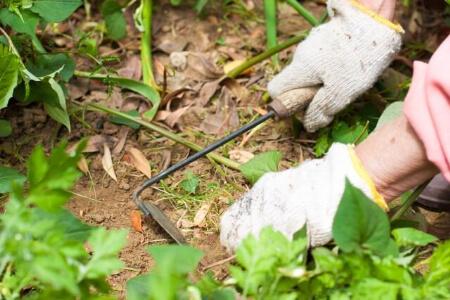 【草刈りの道具】基本の草刈りの道具について知ろう!