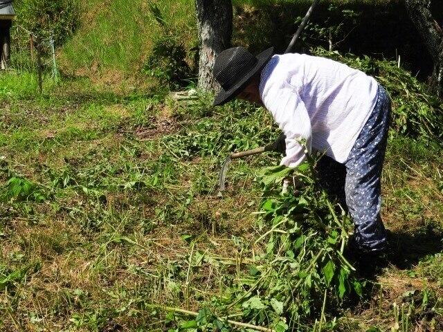 【草刈りの道具】鎌(かま)を使って草刈りする方法を知ろう!