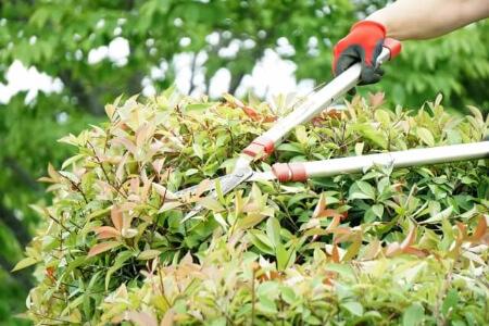 庭木の剪定時期は年に1~2回が基本です