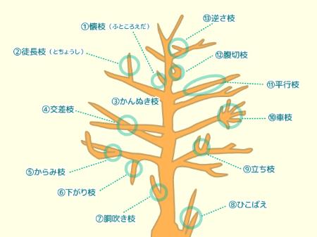 剪定する枝の選び方