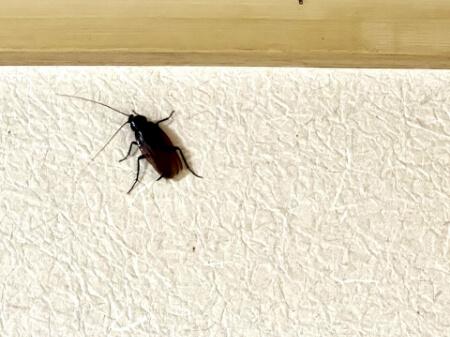 【ゴキブリの対策】冬に湿気がたまらないようにして対策する!