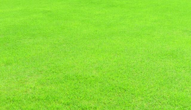 芝生に雑草が生えないように予防する3つのポイントを知ろう!