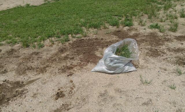 草むしりをラクにするポイントや草むしりの道具をまとめて紹介します