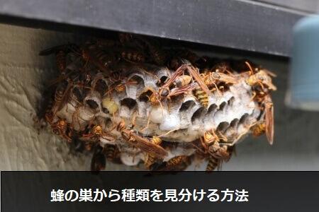 【蜂の種類】蜂の巣をみて何蜂か種類を見分けよう!