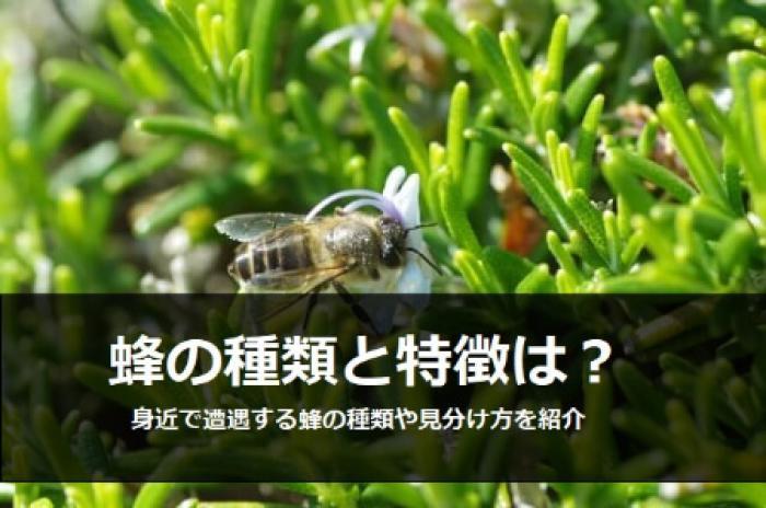 身近に遭遇する蜂の種類を覚えておこう!蜂の種類の見分け方を解説!