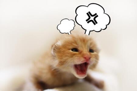 【ネズミの対策】ネズミ対策の間違った3つの事を知ろう!