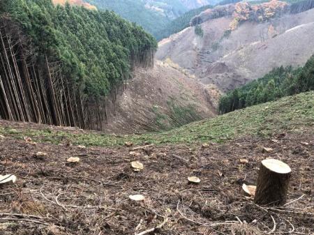 【杉の伐採】杉の木の伐採が進まない4つの理由を知ろう!