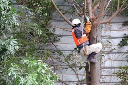 自分で杉の木を伐採できる?杉の木の伐採は業者に任せよう!
