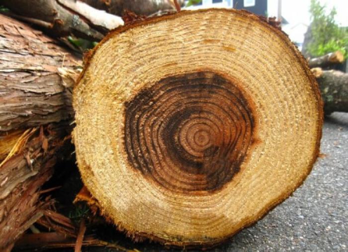 自分で杉を伐採できる?日本に杉が多い理由や杉の伐採が進まない4つの理由