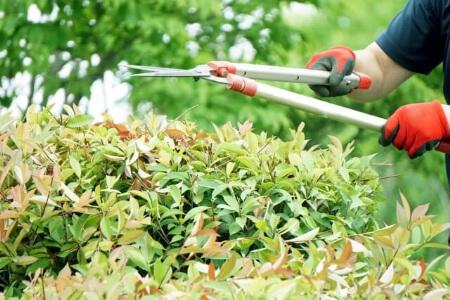 剪定と刈り込みの違いを知ったら庭木の剪定方法を知ろう!