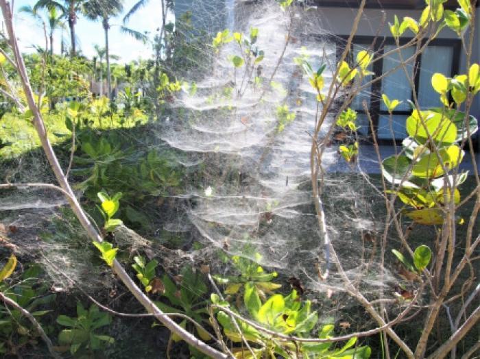 家に出る蜘蛛は私たちの強い味方!家の中の蜘蛛はゴキブリを退治してくれる!