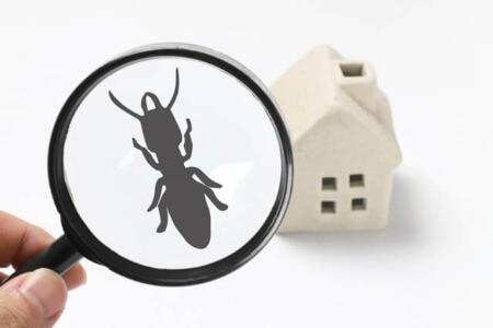 ハエトリグモが家に住みつかないように環境作りして予防しよう!