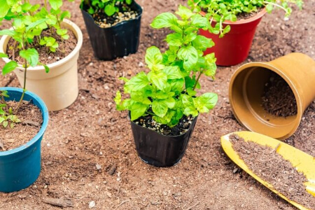 鉢のサイズによって当然土の量は変わります!