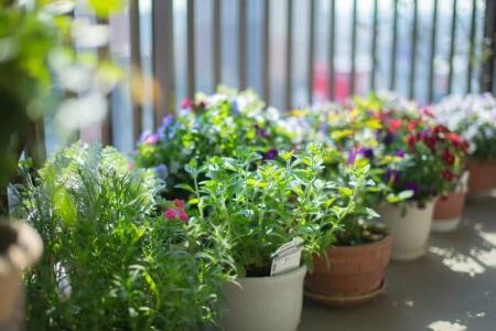 【鉢のサイズの選び方】植えられる植物の目安