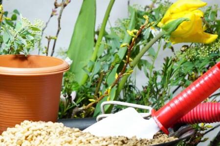 植物の植え替えに困ったら業者に依頼することもできる!