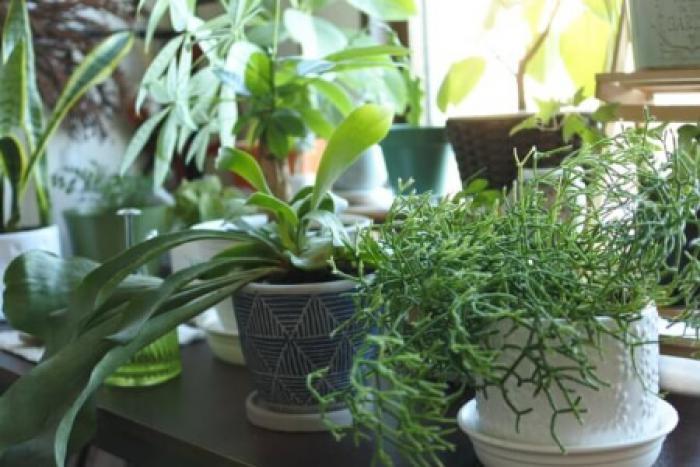 【植木鉢のサイズ】計算しよう!植木鉢のサイズで入れる土の量も違う!