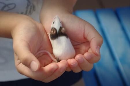 マウスとラットの違いがわかったら特徴の違いも知っておこう!