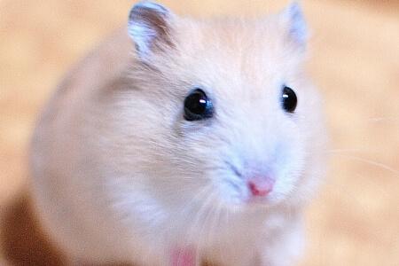 ネズミ(ラット)が家にいたら耐えられない!駆除する方法
