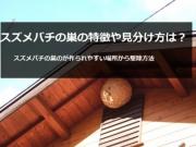 スズメバチの巣を知ってる!?スズメバチの巣のて正しい知識を知ろう!