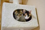 猫は一人暮らしでも飼える? 一人暮らしで猫を迎えるための準備と旅行時の対応
