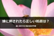 蜂に刺された時の《正しい対処方法》や蜂に《刺された時の症状》を紹介