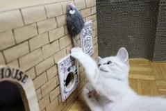 ネズミはモスキート音が嫌い?ネズミを家から追い出すにはモスキート音が◎