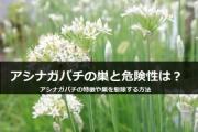 アシナガバチはどんな蜂?アシナガバチ特徴と駆除方法について解説