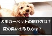 室内犬はカーペットが必要です!犬用カーペットを《選ぶポイント》と《お手入れ方法》