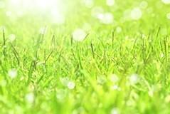 【芝生の手入れ】美しい芝生を保つために基本の芝生の手入れを知ろう!