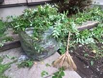《草むしりの道具》便利な草むしりの道具を使ってラクにやってみよう!
