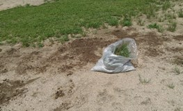 【草むしりのコツ】草むしりをラクにするポイントや道具を知ろう!