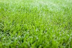 目土を入れるのは初心者でもOK!芝生に目土(めつち)を入れる方法