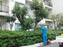 即日対応可能!庭木の消毒