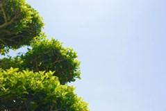 【9月~対応可能!】お客様の納得する、丁寧な施工が売りです。【庭木の剪定】