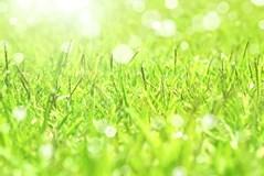 【9月~対応可能!】お客様の納得する、丁寧な施工が売りの芝刈りです!
