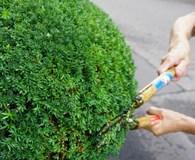 【クレカOK!】20年の業界歴と実績で、おうちの庭木を剪定します!