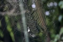 【24時間対応】宮城でクモでお困りなら便利屋フラワーへ! shop686