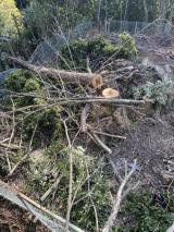 庭木伐採作業