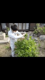 庭木の剪定/伐採 shop2174